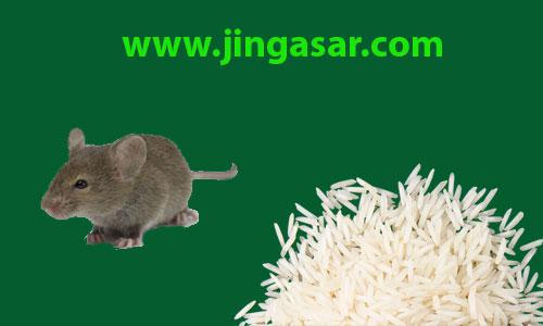 برنج هندی را موش هم نمیخورد