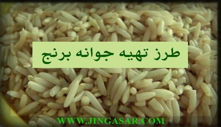 طرز تهیه جوانه برنج